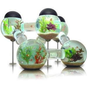 Uniek aquarium