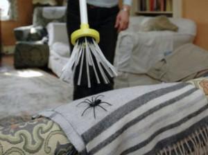 Spinnenvanger