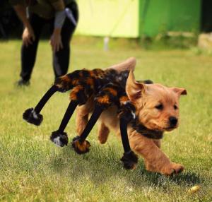 Honden spinnenkostuum Halloween